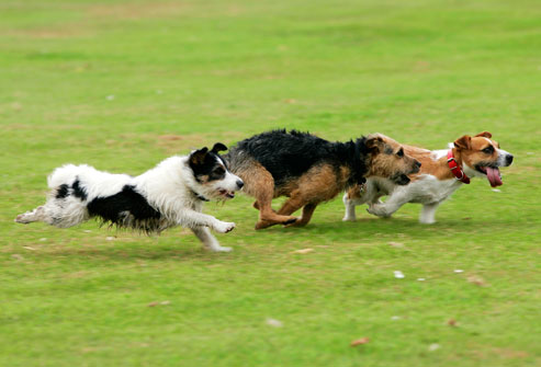 Things Humans Should be Aware of at Dog Parks