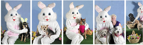 Photos with Hoppy Paws