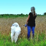 Getting Fit: Alone or with a Pooch