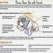 BEWARE of Heat Stroke in Dogs!