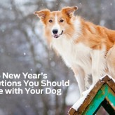 5 New Year's Resolutions to Make With Your Dog