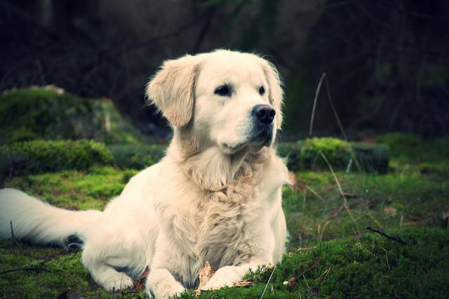 Lakewood Dog Ordinance