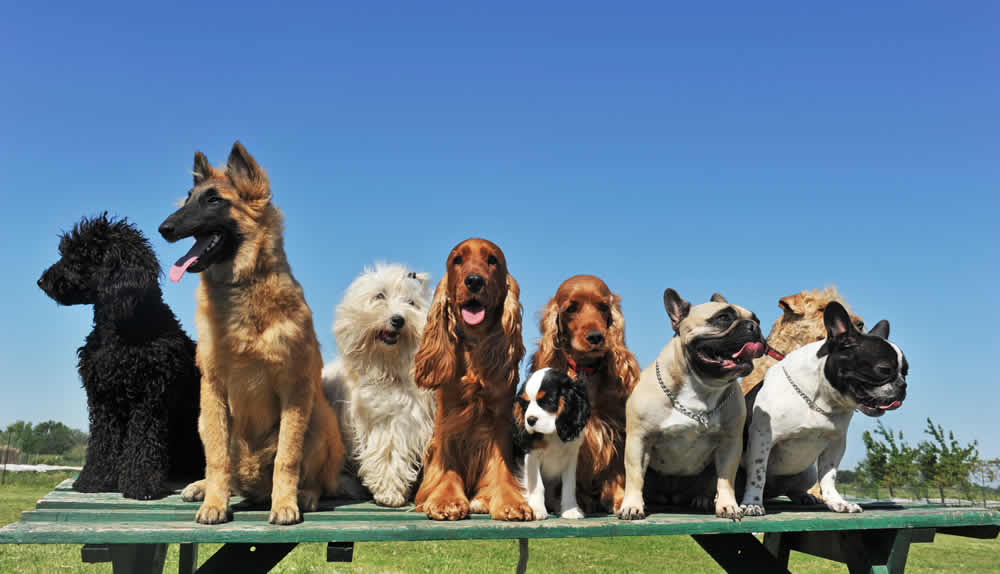 Lakewood Dog Park - Pet Ownership