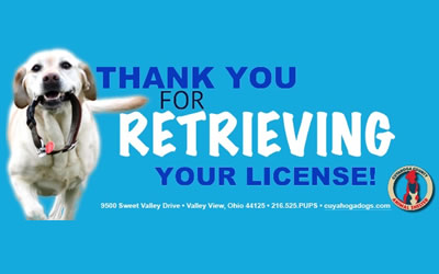 Dog License Time